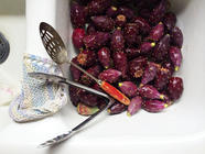 Harvesting and Processing Prickly Pear Fruit found on PunkDomestics.com