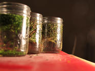 Infused Herb Vinegar found on PunkDomestics.com