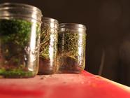 Infused Herb Vinegar found on PunkDomestics.com