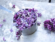 Lilac Syrup found on PunkDomestics.com