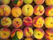 Brandied Peach Chunks - Preserving Gone Wrong found on PunkDomestics.com