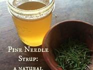 Pine Needle Syrup found on PunkDomestics.com