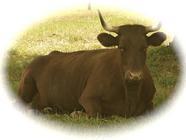 Auburn Meadow Farm found on PunkDomestics.com