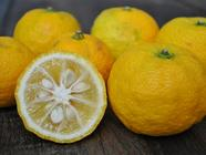 FruitMaven found on PunkDomestics.com