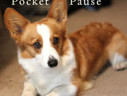 Pocket_Pause found on PunkDomestics.com