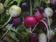 Ravishing Radishes found on PunkDomestics.com