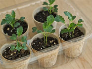 Starting Plants Indoors from Seed