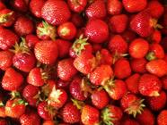 The Freshest Tasting Strawberry Freezer Jam found on PunkDomestics.com