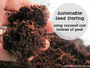 Sustainable Seed Starting: Using Coconut Coir found on PunkDomestics.com