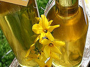 Forsythia Syrup found on PunkDomestics.com