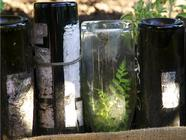 5 Reasons Why Bottle Raised Beds Are the Best found on PunkDomestics.com
