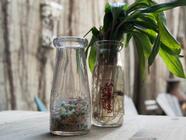 Wild Leek Herbes Salées  found on PunkDomestics.com