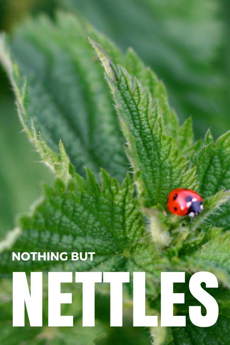 Nothing but Nettles, found on PunkDomestics.com. Image modified from Ladybird & Nettles, Studland Dorset by H Matthew Howarth, on Flickr via Creative Commons license