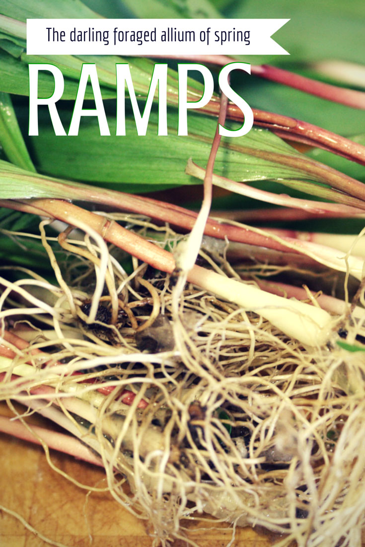Ramps, found on PunkDomestics.com. Image modified from Danielle Scott, on Flickr via Creative Commons license