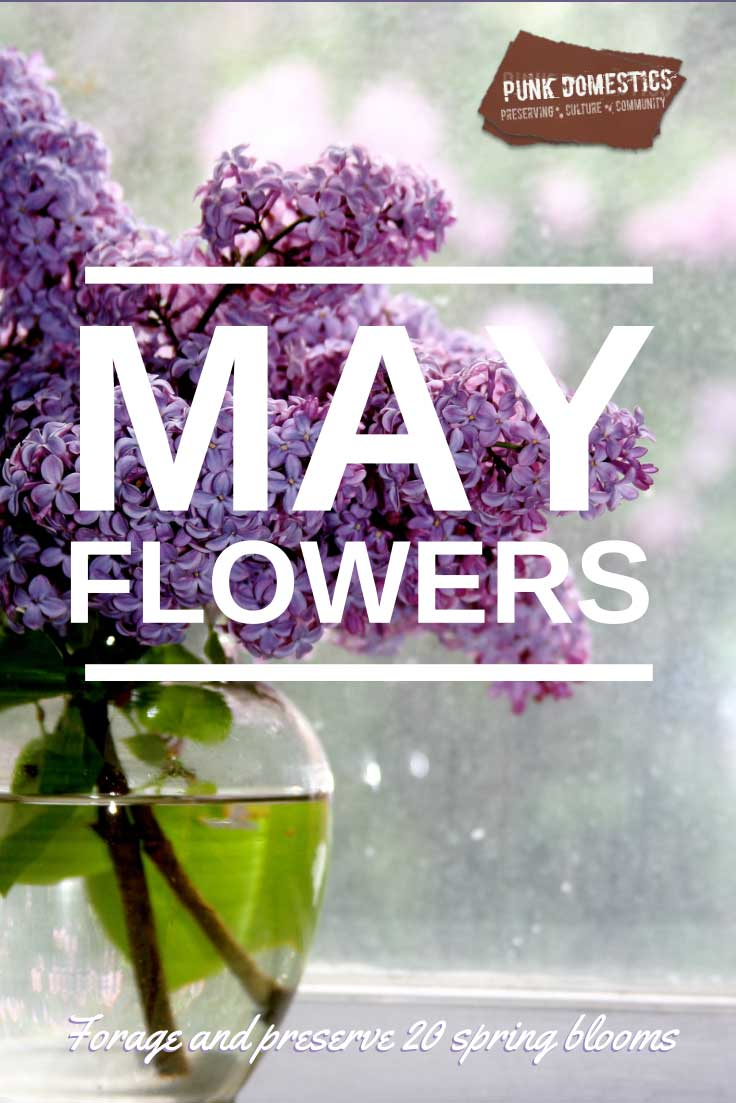 May Flowers: 20 Spring Blossoms to Forage and Preserve, on Punk Domestics
