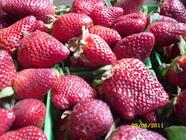 Refreshing Strawberry Lime Jam found on PunkDomestics.com