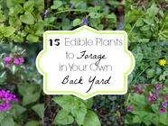 15 Plants to Forage in Your Own Back Yard found on PunkDomestics.com
