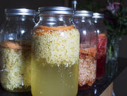 Elderflower Infusions found on PunkDomestics.com