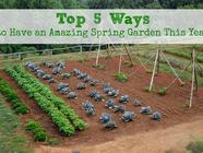 Top 5 Ways to have an Amazing Spring Garden found on PunkDomestics.com