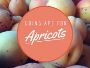 Going Ape for Apricots found on PunkDomestics.com