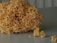 The Weird & Wonderful Cauliflower Mushroom found on PunkDomestics.com