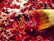 Cranberry Mustard found on PunkDomestics.com