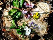 Edible Wild - Mid/Late Spring found on PunkDomestics.com