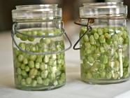 Pickled Nasturtium Pods (DIY Capers) found on PunkDomestics.com