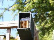 Mason Bees found on PunkDomestics.com