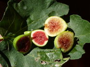 Sicilian Preserved Figs found on PunkDomestics.com