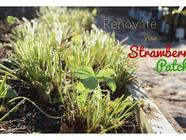 How to Renovate (Prune) Your Strawberry Patch found on PunkDomestics.com