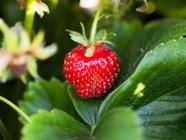 Strawberry-Marsala Jam with Rosemary found on PunkDomestics.com