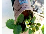 Don't Throw Out Your Old Toms! Plant In Them! found on PunkDomestics.com