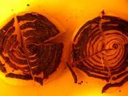 Roast It! The Easiest Roasted Habanero Salsa  found on PunkDomestics.com