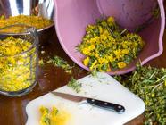 The Mellowest Yellow: Dandelion Wine found on PunkDomestics.com