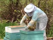 {the honeybee saga} The Bees Arrive! found on PunkDomestics.com