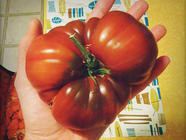 Growing Tomatoes in the Pacific Northwest found on PunkDomestics.com